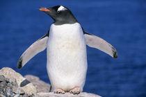 Antarctica von Danita Delimont