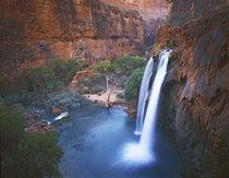 Havasu Falls von Danita Delimont