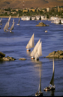 Feluccas sailing on the Nile River by Danita Delimont