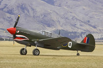 Curtiss P-40 Kittyhawk by Danita Delimont