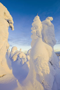 Snowghosts at sunset at Whitefish Mountain Resort in Montana by Danita Delimont