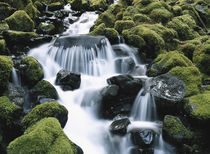 Moss growing on rocks waterfall by Danita Delimont
