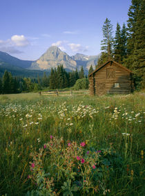 Old Park Service cabin in the Cut Bank Valley of Glacier National Park in Montana by Danita Delimont