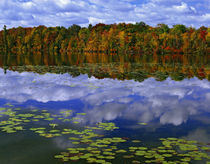 Autumn color reflects in Park Haven Lake von Danita Delimont
