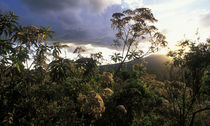 Setting sun lights rainforest lining rim of Ngorongoro Crater by Danita Delimont