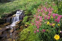 Wild flowers von Danita Delimont