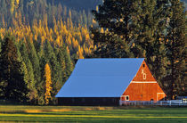 A Farmed red barn built in 1911 near Troy Montana Jim Winslow Ranch von Danita Delimont