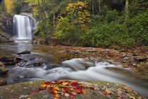 Looking Glass Falls in the Pisgah National Forest in North Carolina von Danita Delimont