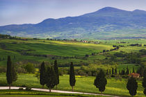 Scenic of the Tuscan countryside von Danita Delimont