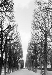 Boulevard Saint Michel by Danita Delimont