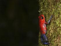 Costa Rica by Danita Delimont