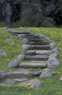Stone stairway and dandelions by Danita Delimont