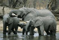 Botswana von Danita Delimont