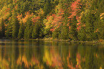 Fall reflections at Bubble Pond von Danita Delimont