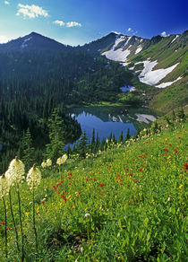 Alpine Wildflowers in the Jewel Basin in the Swan Range of Montana by Danita Delimont