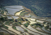 Flooded rice terraces of Honghe von Danita Delimont