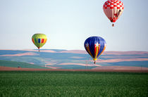 Colorful hot air balloons float over wheat fields in Walla Walla by Danita Delimont