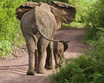 Elephant mother and calf at Lake Manyara NP by Danita Delimont