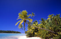 Palm lined beach Cook Islands von Danita Delimont