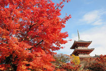 Kiyomizu temple in Autumn color von Danita Delimont