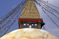 Bouddhanath Stupa von Danita Delimont
