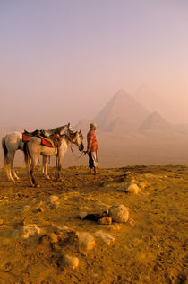Giza pyramids at dawn with horses and guide von Danita Delimont