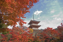 Pagoda in Autumn colour by Danita Delimont