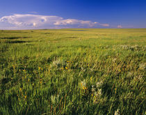 Short Grass Prairie in remote northeastern Montana von Danita Delimont