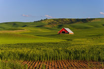 A scenic view of a barn in Moscow Idaho by Danita Delimont