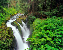Sol Duc Falls in Olympic National Park in Washington by Danita Delimont