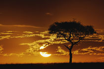 Kenya by Danita Delimont