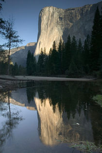 ) Dawn View w/Merced River Reflection by Danita Delimont