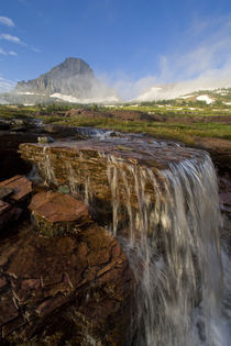 The Hanging Gardens at Logan Pass in Glacier National Park in Montana by Danita Delimont