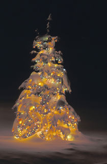 Multi-colored holiday lights decorate a spruce tree at night after a fresh snowfall von Danita Delimont