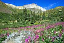 Sneffels Wilderness Area by Danita Delimont