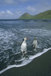 Sub-Antarctic Australia by Danita Delimont