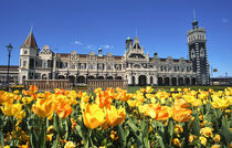 Dunedin Railway Station by Danita Delimont
