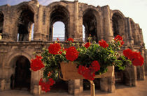 Roman amphitheater (arenes); view with flowers by Danita Delimont