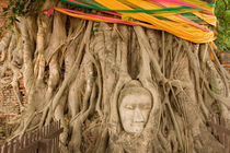 Buddha in tree ruts at Ayutthaya by Danita Delimont