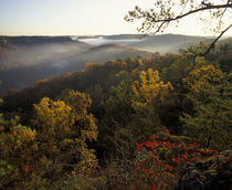 Foggy ridges of Red River Gorge geological area in autumn by Danita Delimont