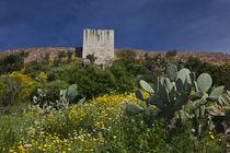 Cacti and Castello Malaspina by Danita Delimont