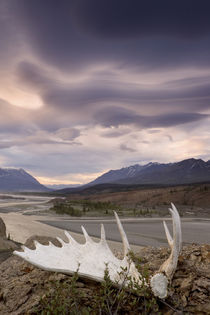 Moose antler and rugged landscape von Danita Delimont