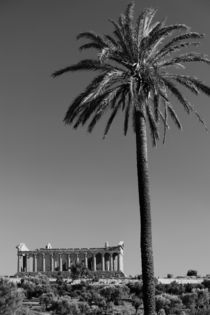 The Temple of Concordia (430 BC) & Palms von Danita Delimont