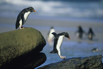Falkland Islands by Danita Delimont