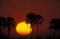 Zibalianja; Telephoto view of orange and yellow sun setting between two palm trees by Danita Delimont