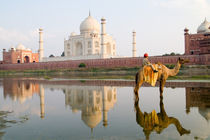 World famous Taj Mahal temple burial site at sunset with young boy on camel from Yamuna River with reflection in town of Agra India (MR) von Danita Delimont