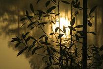 Sunrise reflected in pond between branches von Danita Delimont