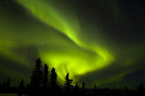 Aurora Borealis in the night sky by Danita Delimont
