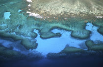 Coral Reefs - aerial by Danita Delimont
