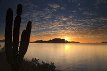 The sunrise over Isla Danzante in the Gulf of California from near Loreto Mexico by Danita Delimont
